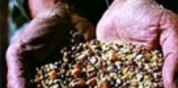 How to Make Organic Chicken Feed | eHow.com