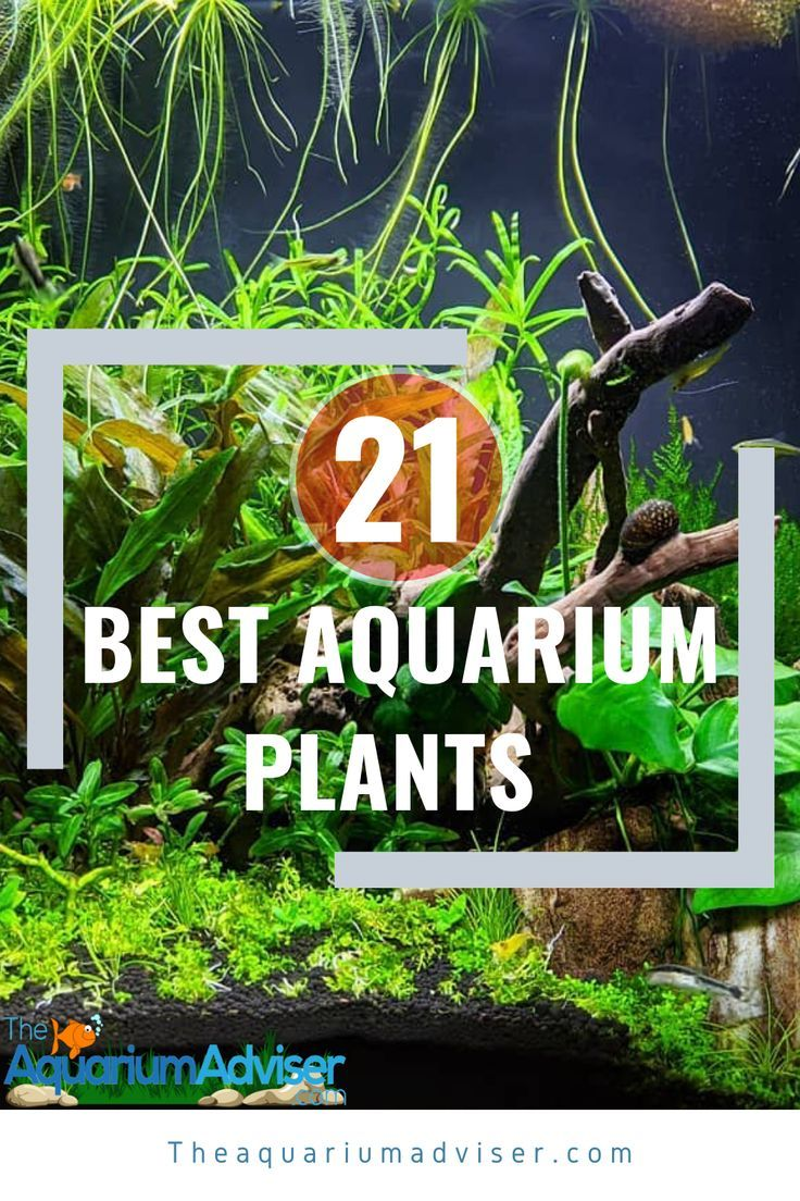 Nano Planted Tank In 2020 Freshwater Aquarium Plants Cool Plants Freshwater Plants