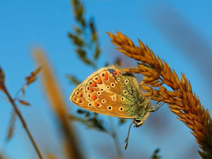 butterfly by Martijn Eilander on 500px