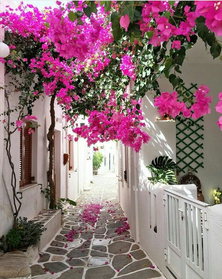 Paros-Kikladhes-Greece. Pink addiction