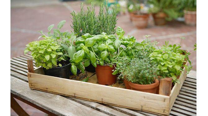Bylinky môžete pestovať samostatne, ale aj v jednej nádobe