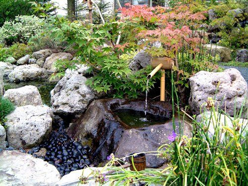 Fântână japoneză. www.planthalia.ro