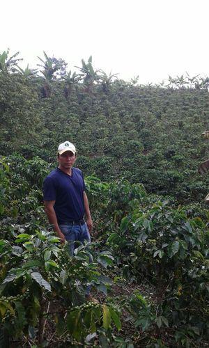 Cultivos de café de excelente calidad son producidos en Piendamó. fotos suministradas por Alexander Cajiao Buitrón.