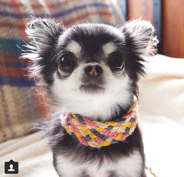 12 Best Love Dogs Images On Pinterest Baby Puppies Doggies And