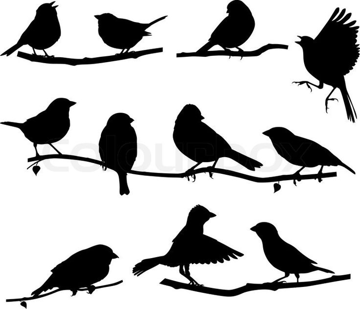 Stock vector of 'Vector images silhouettes of birds on a branch'