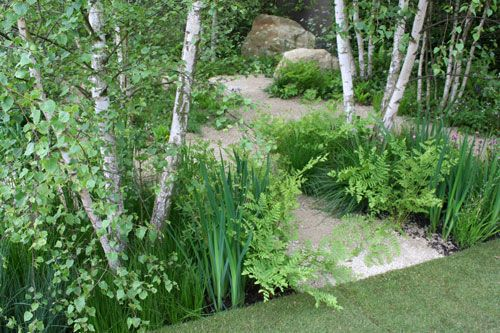 Silver birches, ferns and irises - beautiful planting by garden designer Sarah Price