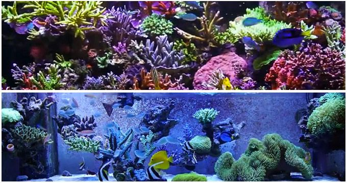 Aquascaping, Coins and Blog on Pinterest