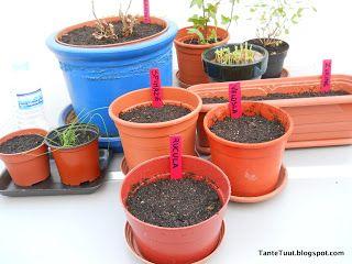 Bij Tante Tuut op de Koffie: Plantenlabels maken met Tante Tuut