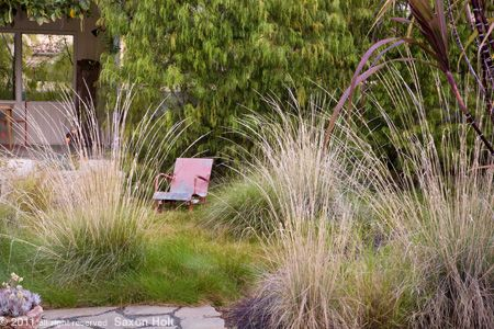 Backyard meadow grass garden with rustic chair in the for Wild grass gardens