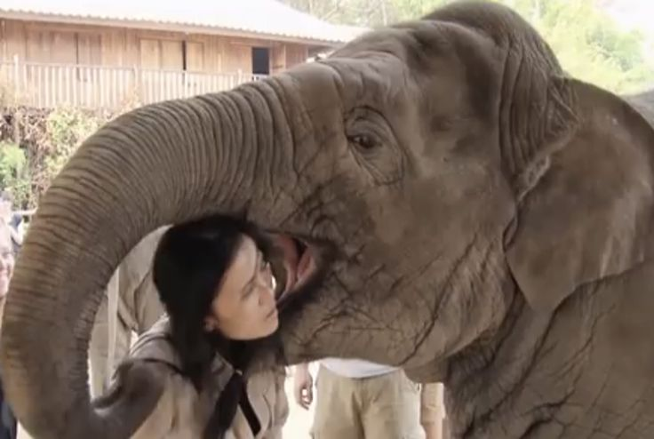 While it may appear that Faa Mai is attempting to eat Lek for lunch, she is actually giving her a big elephant smooch!