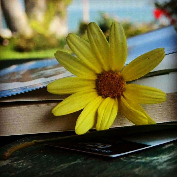Benim dünyam, benim kitaplarım ,hazinem