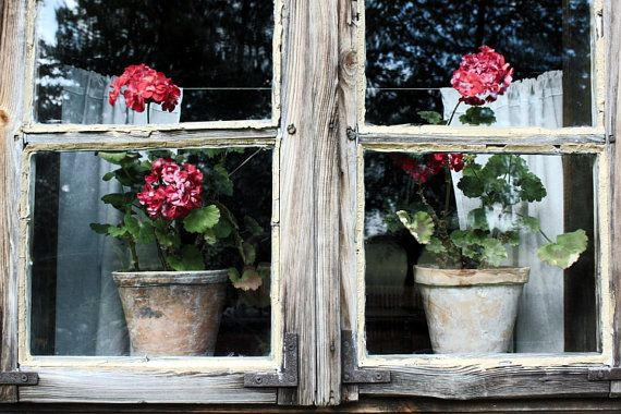 still life photography print primitives country decor rustic decor nature photography flower photography red flowers 4x6 5x7 6x8 8x10 10x15  https://www.etsy.com/shop/AnnaKiperPhoto