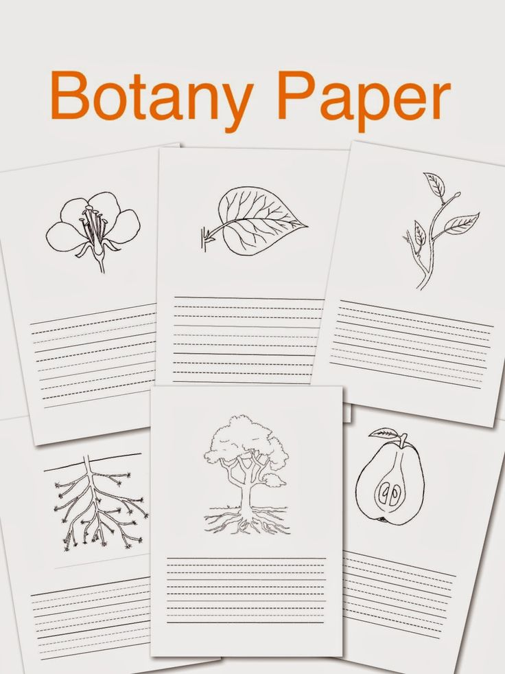 botany plant paper Botany & plant biology 2007 - chicago meeting website  (paper us$2195) 192 pp university press of colorado reviewer requested: stelar evolution and morphology .