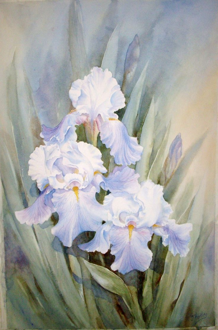 111 Best Images About White Flower Paintings On Pinterest