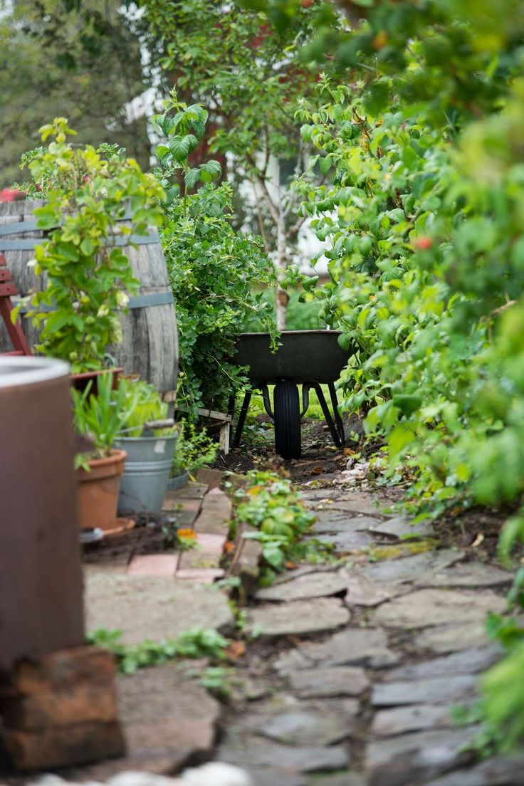 """""""Tidigare generationer har inte haft något större trädgårdsintresse och allt var i princip bara en stor gräsmatta med lite fruktträd och bärbuskar i utkanterna innan jag kom hit. Jag hade drömmar om en lantlig lite romantisk trädgård istället."""" Tips! Skippa i mossrivningen och ogräsrensningen av gräsmattan och gör något roligare istället. Mossa är också grönt och blommor i gräsmattan är vackert."""