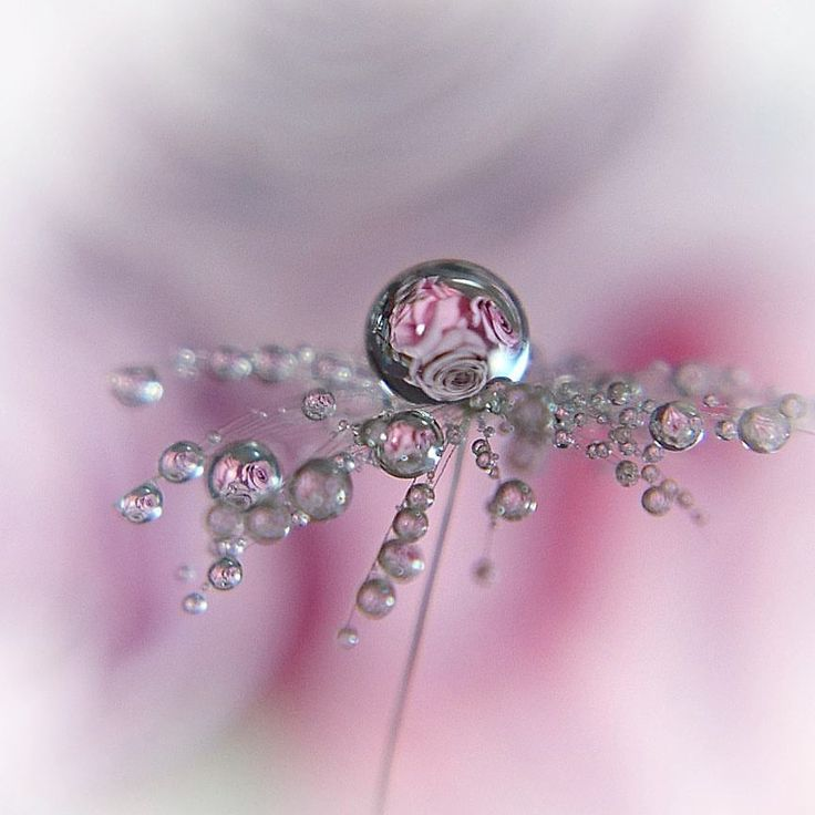 "992 Likes, 25 Comments - @oukan825 on Instagram: ""* 綿毛drop * * * LocationNagasaki Pref. * * #雫 #綿毛 #drops #pusteblume #splendid_flowers…"""