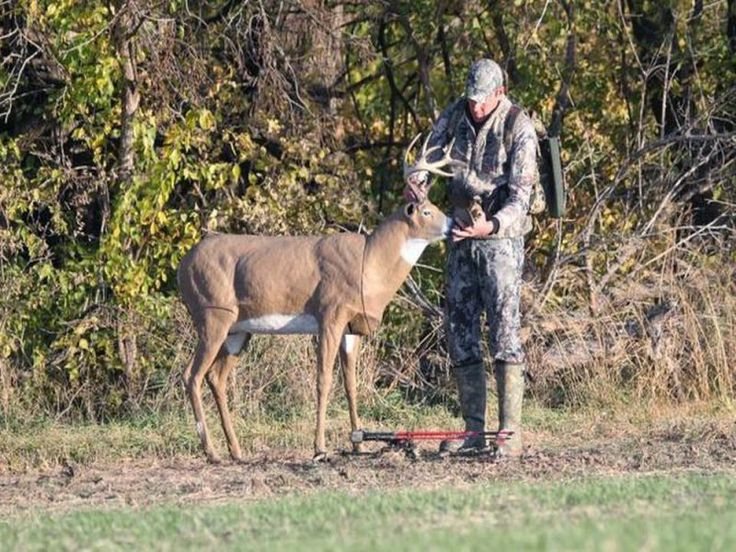 The Best Deer Decoy: Reviews and Recommendations