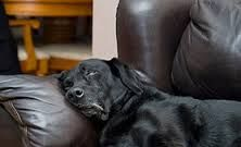 Dog sleeping in Village Vet Animal Clinic,Broken Arrow,OK