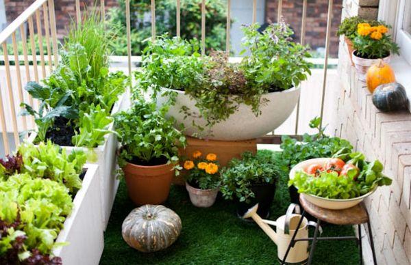 Hängenden Garten auf Balkon gestalten - Kürbisse und Kunstgras