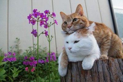 cybergata:  Shironeko and his Bro