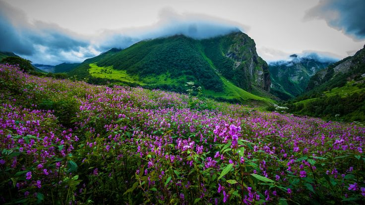 Valley of Flowers in Uttarakhand.Between June and October, go on a six-day trek to Uttarakhand's famous Valley of Flowers, located in the Nanda Devi Biosphere.  Make it happen: GIO Adventures conducts six-day walking tours starting in Ghangaria that cost Rs16,000 per person.