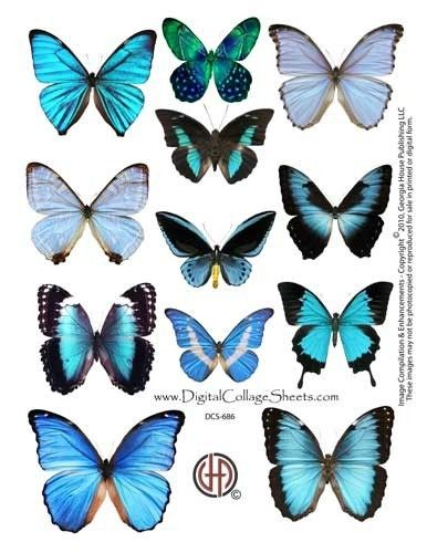 Instant Download Butterfly Digital by DigitalCollageSheets