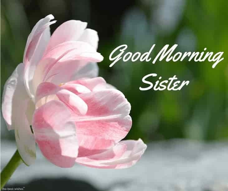 120 Lovely Good Morning Wishes And Greetings For Sister Good Morning Love Messages Good Morning Sister Images Good Morning Wishes
