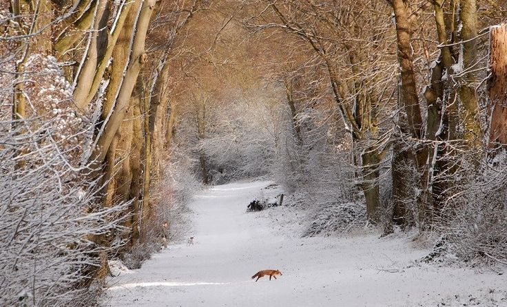 Winter is quieter in the woods, but there is still plenty to see (Photo: WTML / Nick Spurling)
