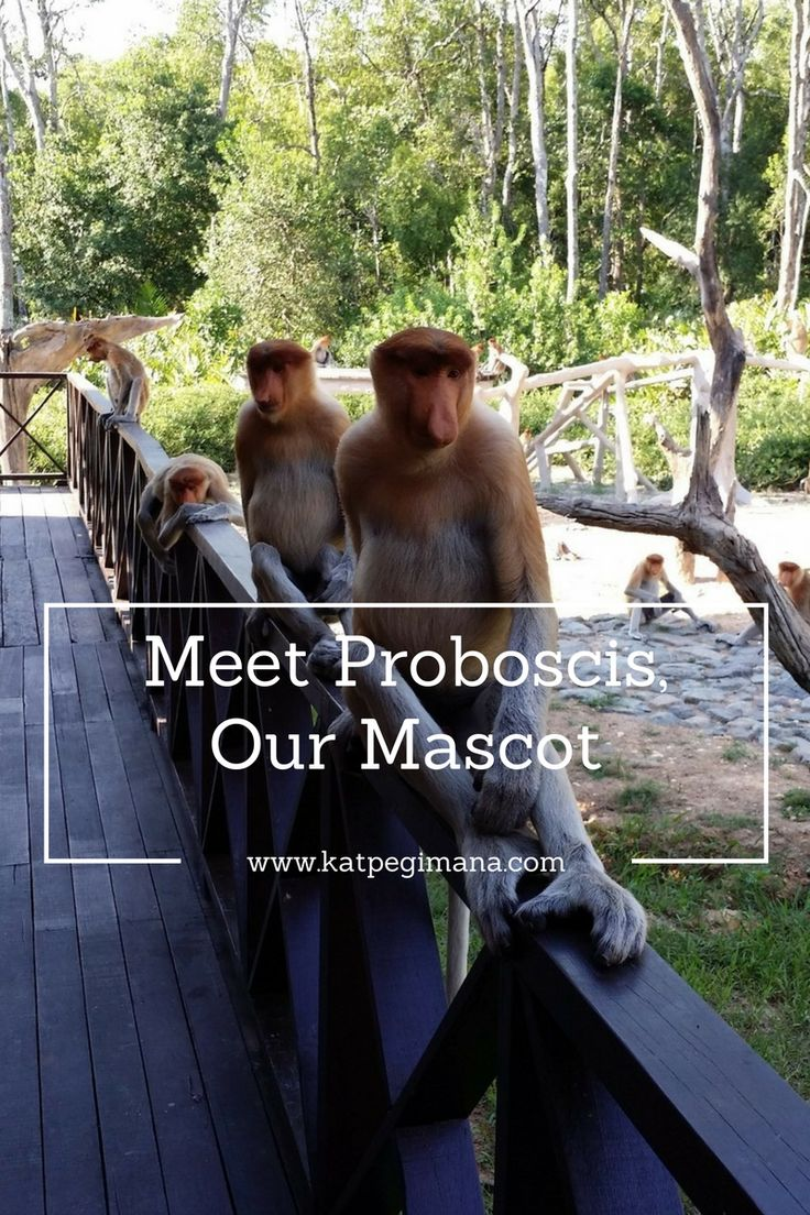 My visit to the Labuk Bay Proboscis Monkey Sanctuary in Sandakan to see this unique creature only be found in Borneo.