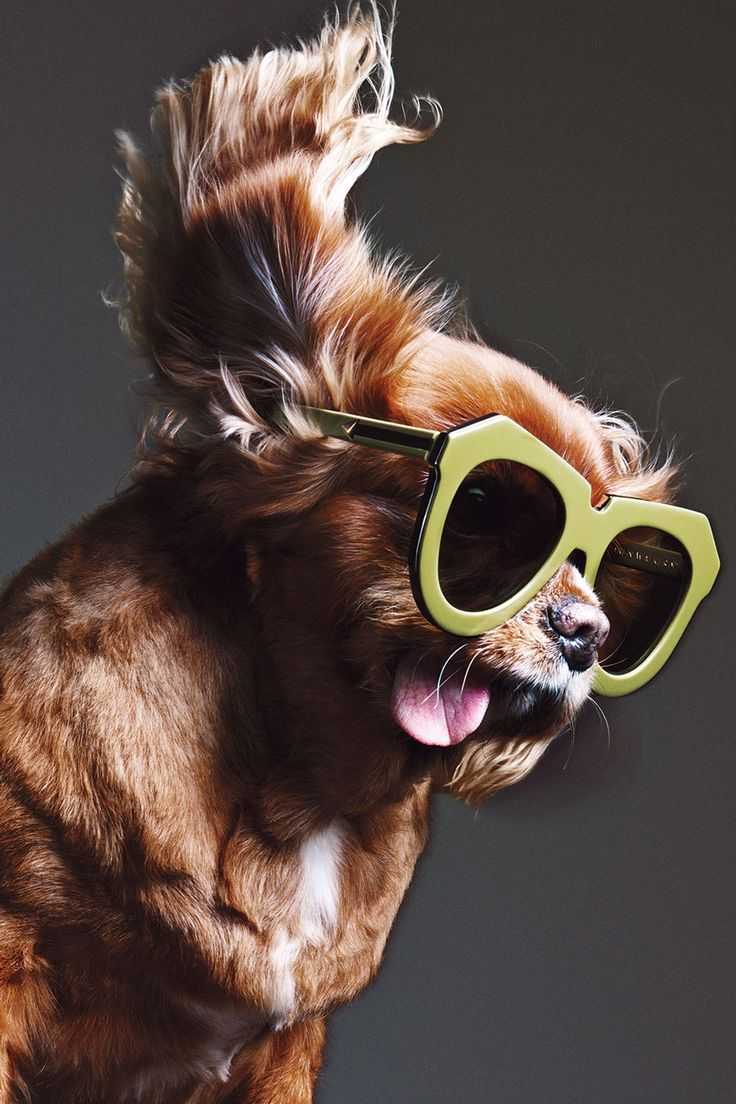 This little pup, Toast, has all the feels! He is looking pretty happy with those sunglasses on and we cant help but laugh at that tongue hanging out of his mouth!