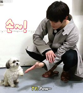EVEN THAT PUPPY CAN'T RESIST GIVING LEE TAEYONG HIS PAW!!!! THIS IS SO FRICKIN ADORABLE SOMEBODY PASS ME A TISSUE