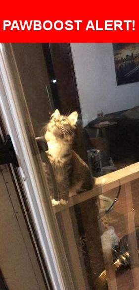Is this your lost pet? Found in Harrisonville, MO 64701. Please spread the word so we can find the owner!  Adorable striped fluffy cat with white paws. Came to our home. We loved on her for about 2 hours gave her food and water. Left our garage open. Super sweet. Is this your cat???  Nearest Address: Near S Independence St & W Mechanic St