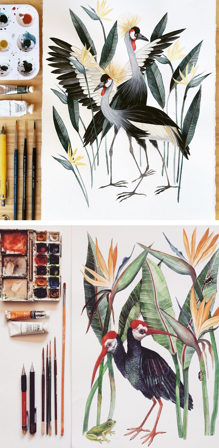 Illustrations by Georgina Taylor #birdillustration #sketchbook #gouachepainting #animalart