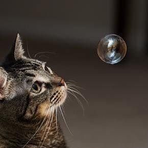 cute cat focusing on a floating bubble