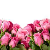 rosas cor de rosa isolados em um fundo branco - Stock Photo # 42637997