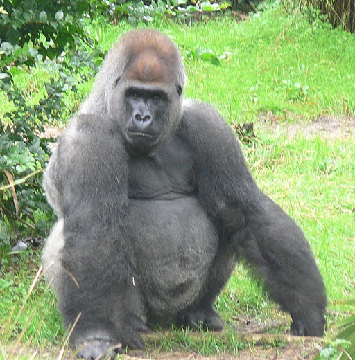 #CaterpillarVideo with Gorillas: How cute