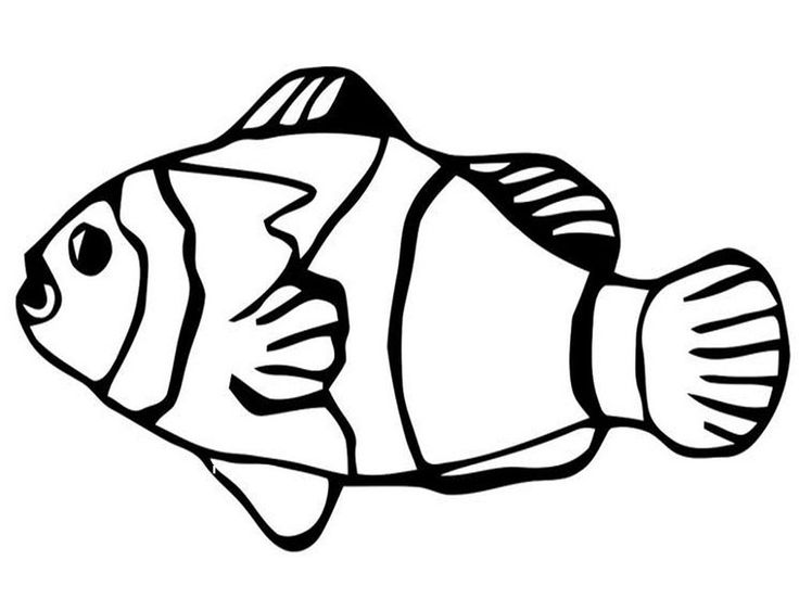 Coloring Pages Sharks : 7 best coloring book pages images on pinterest coloring pages for