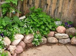 Sweet Woodruff for the shady side of the house.