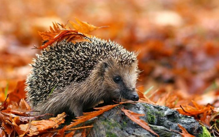 960 best art images on pinterest fall scenery and colors - Image animaux gratuite ...