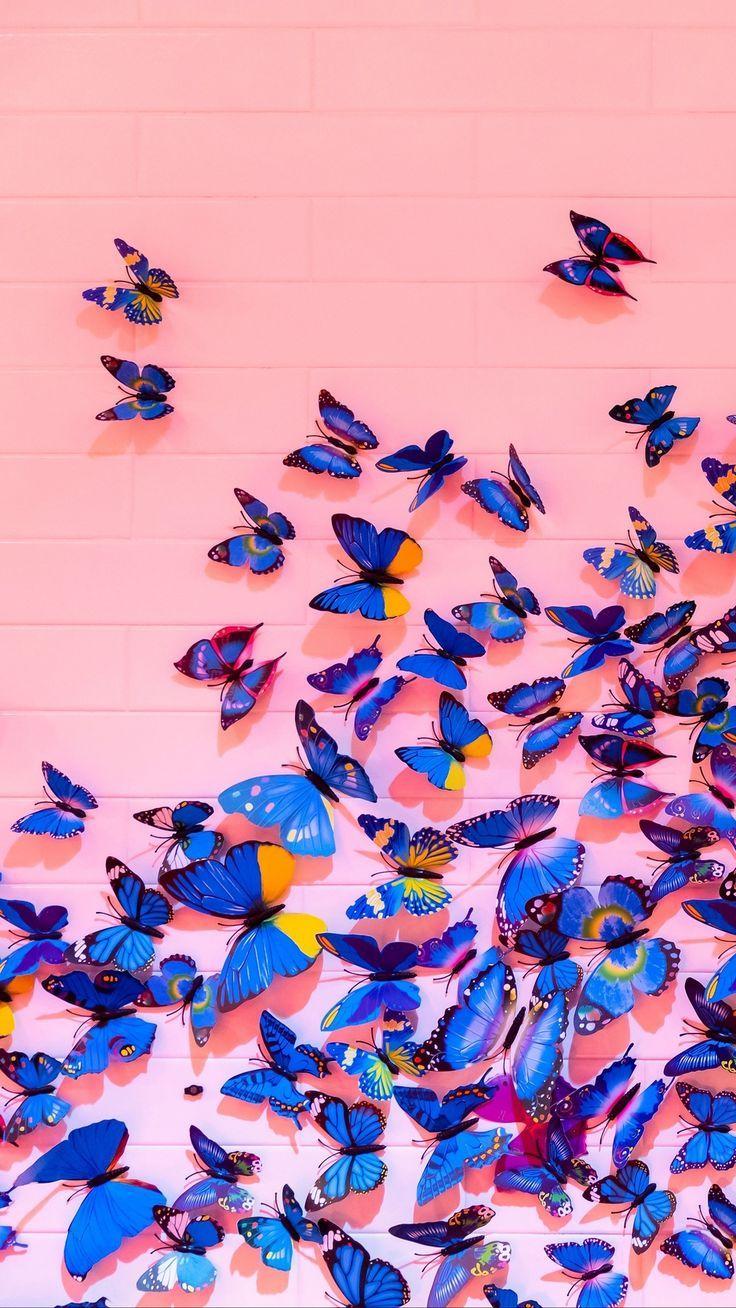 Beautiful Blue Butterflies Butterfly Wallpaper Iphone Butterfly Wallpaper Bright Wallpaper