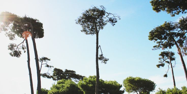 –Those Sleeping Ents -Tashreeq Adams http://floatingsmoke.tumblr.com/ #Photography#Nature#Landscape#Ents #Trees
