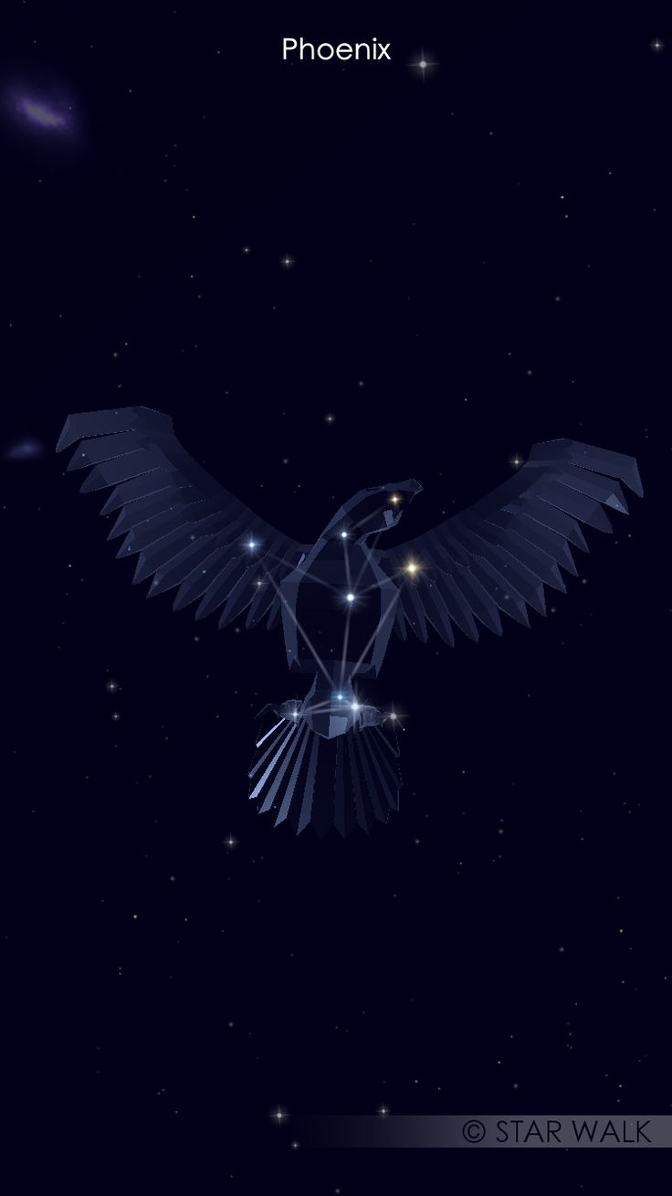 Constellation tattoo of a Phoenix