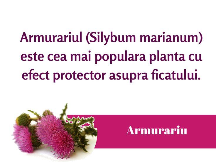 #Armurariul protejeaza si detoxifica ficatul. #ProtectieHepatica #DetoxiereFicat #Silimarina