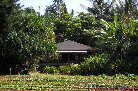 North Country Farms, Kilauea, Kauai, Hawaii