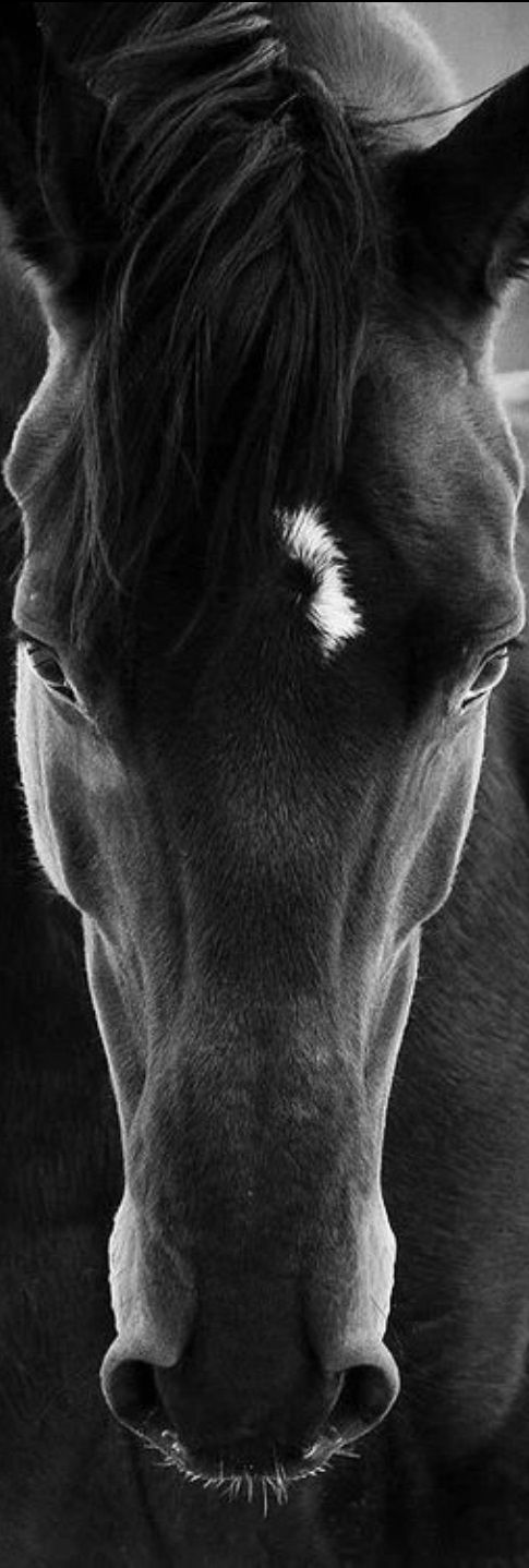 Stunning photo. Thx for sharing ... ~storm_rider1