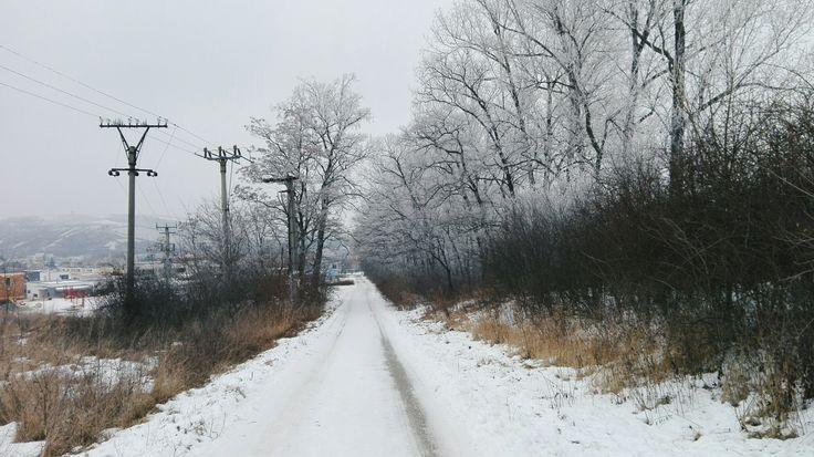 #road #snow #winter #trees #foggy #sky