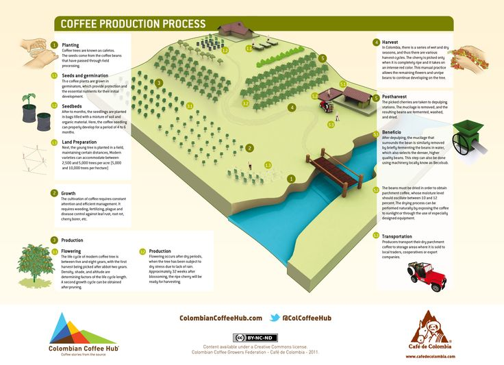 coffee-production-process.jpg (2773×2010)