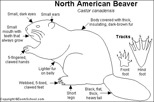 Beaver lodge diagram - photo#55