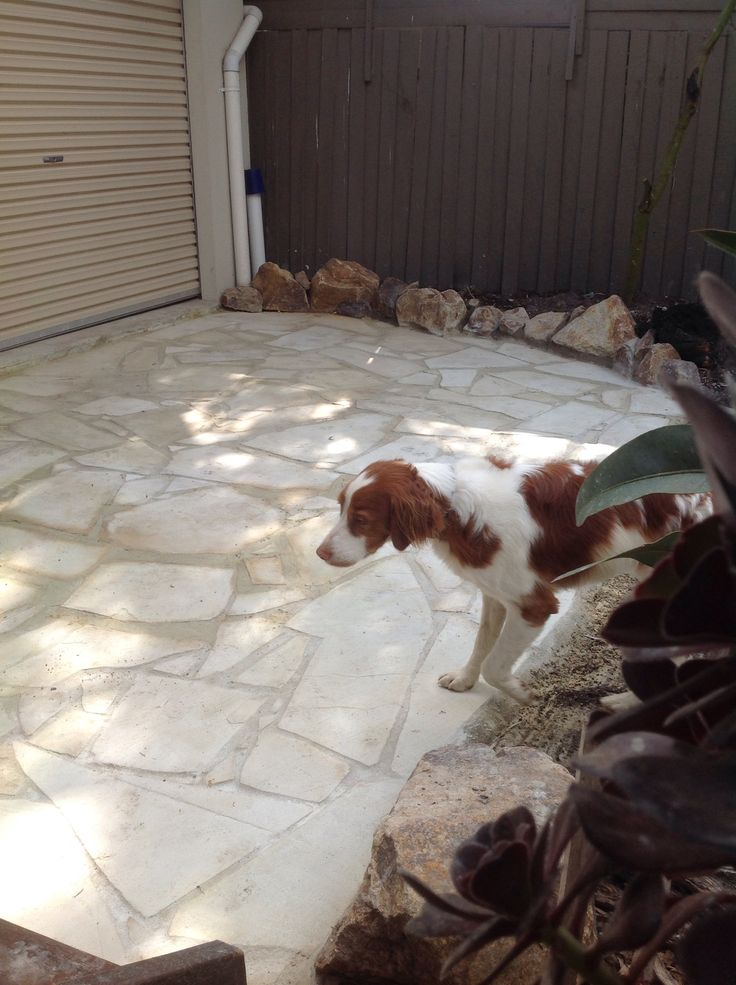 McGee checking out his handy work on the flagstone patio. Hope there's no bones under there buddy!!