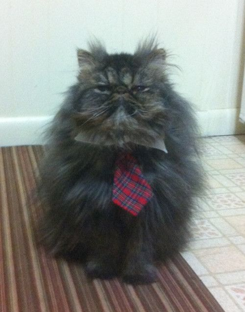 Business cat- Mr. Grumplepuss, of Squeakies Cat Toys, Inc.